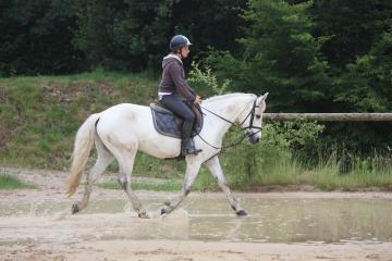 AFPC - Ponys for sale - Association Française du Poney Connemara