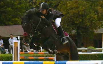 connemara cheval saillie
